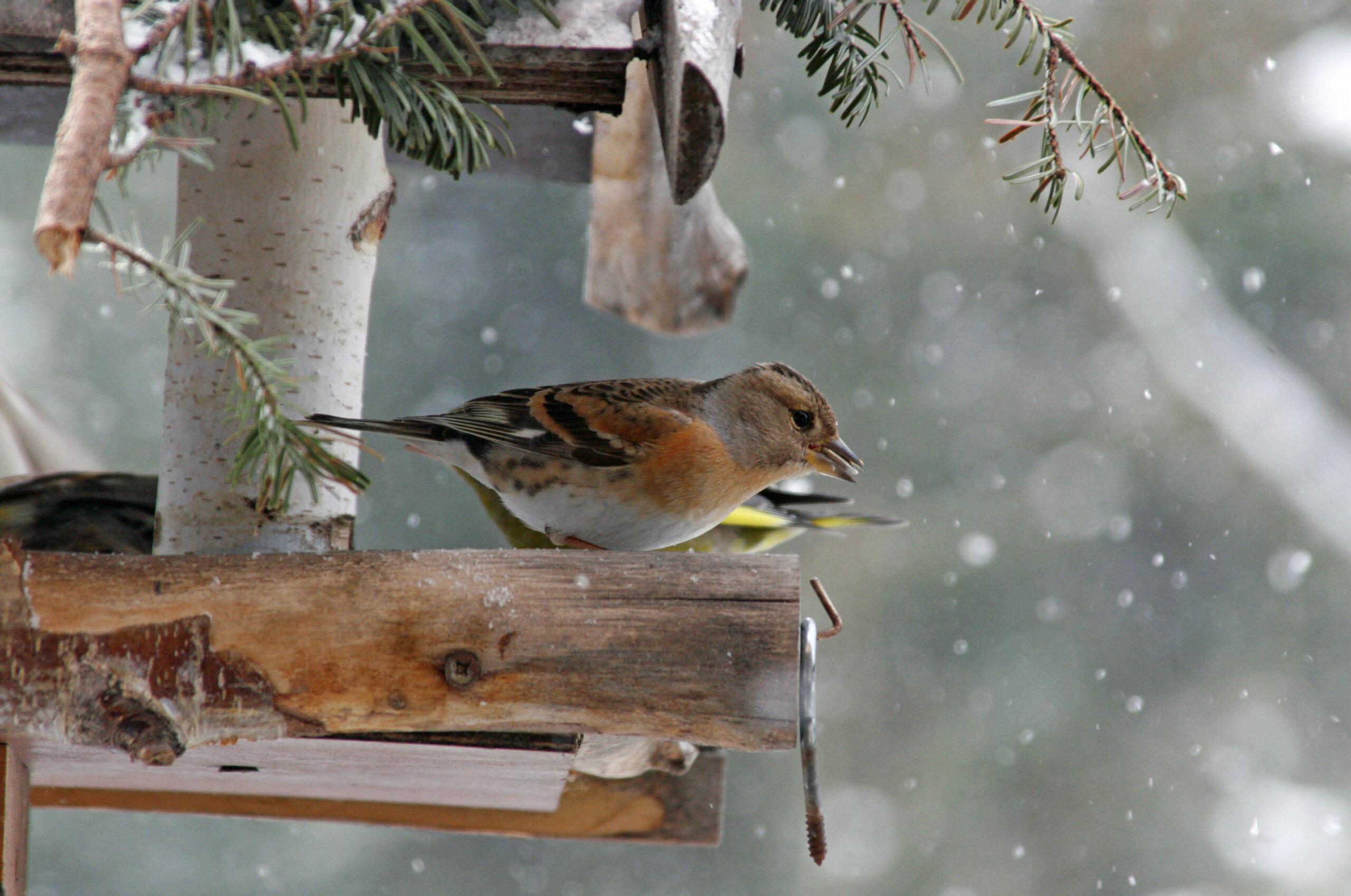 Vogelhäuschen Winter