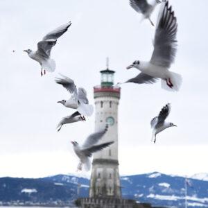 Möwen und Turm